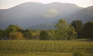 Veritas Vineyards and Winery